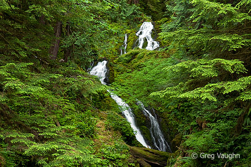 Bunch Falls, Olympic National Park.