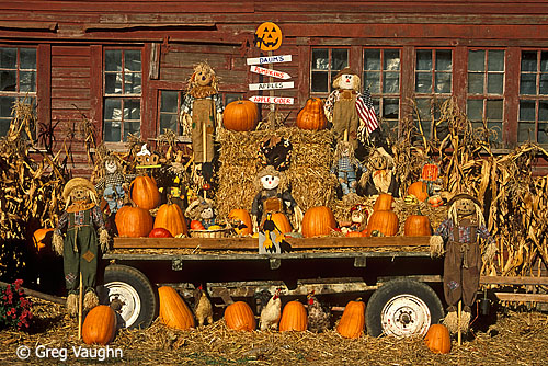 pumpkins at produce stand