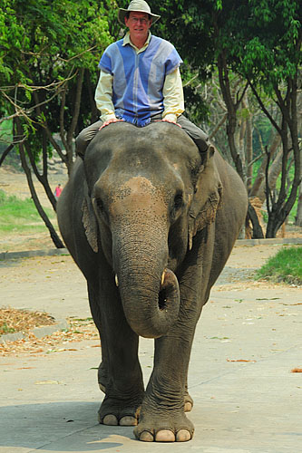 riding at an elephant at Patara Elephant Farm, Thailand