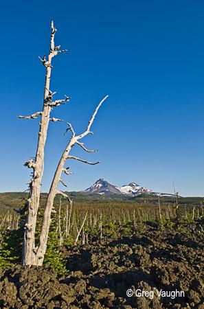 Lava field at McKenzie Pass