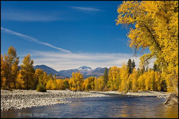 Methow River with cottonwood trees in fall color